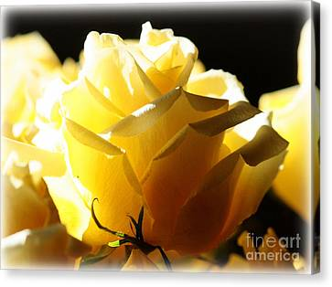 Shadows And Light Canvas Print - Look On The Bright Side  by Carol Groenen