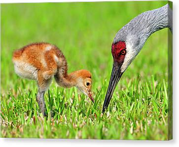 Looking For Bugs Canvas Print
