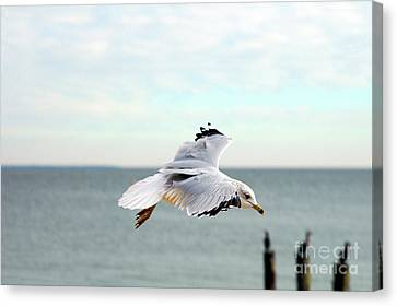 Clayton Canvas Print - Looking For Dinner by Clayton Bruster