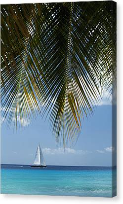 Looking Through Palm Trees To Large Canvas Print by Axiom Photographic