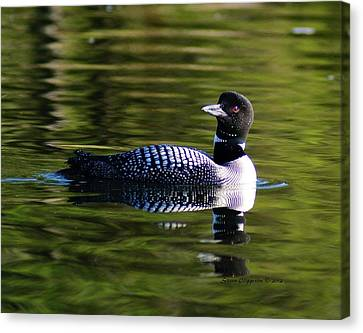 Canvas Print featuring the photograph Loon 4 by Steven Clipperton