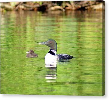 Loons Big And Small Canvas Print by Steven Clipperton