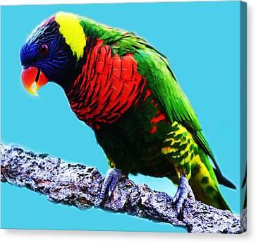 Lory Bird Canvas Print by Paulette Thomas