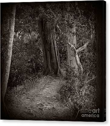 Lost In The Forest Canvas Print