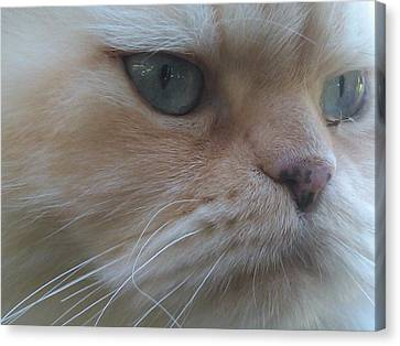 Lost In Thought Canvas Print by DJ Laughlin