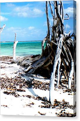 Canvas Print featuring the photograph Cozumel Mexico  Paradise On Earth by Danielle  Parent