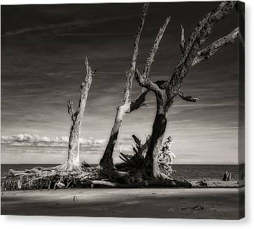 Lost World Canvas Print by Mario Celzner