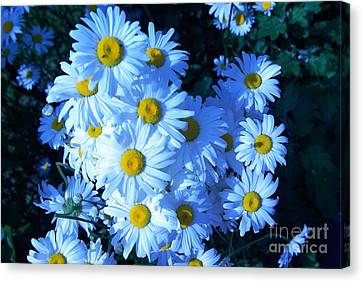 Canvas Print featuring the photograph Lot Of Daisies by AmaS Art