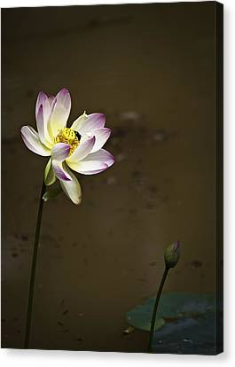 Lotus And Friend Canvas Print by Rob Travis