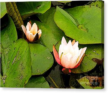 Lotus B Position Canvas Print by Charlie Spear