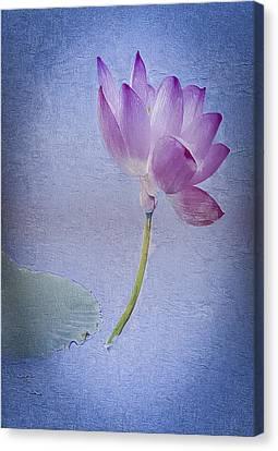 Lotus Dream Canvas Print by Jill Balsam