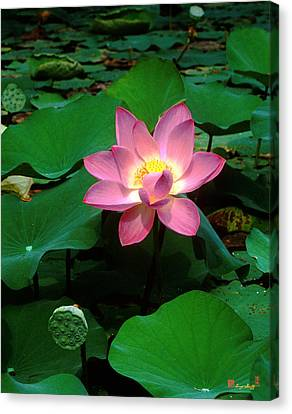 Lotus Flower And Capsule 24a Canvas Print by Gerry Gantt