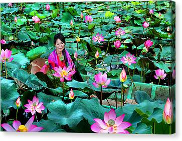 Lotus Season Canvas Print