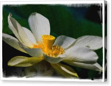 Canvas Print featuring the photograph Lotus by Travis Burgess
