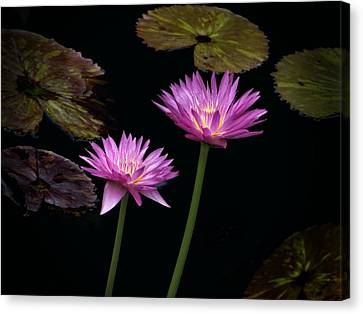 Lotus Water Lilies Canvas Print by Rudy Umans