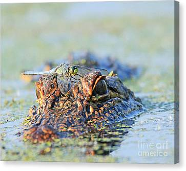 Canvas Print featuring the photograph Louisiana Alligator With Dragon Fly by Luana K Perez