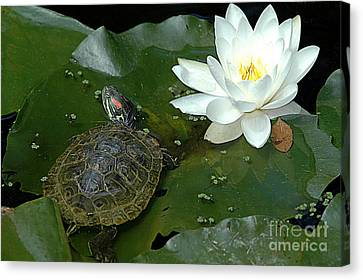Lounging On A Lily Pad Canvas Print by Tonia Noelle