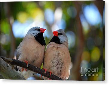 Canvas Print featuring the photograph Love Birds by Linda Mesibov