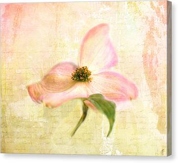 Love Letter Vi Canvas Print by Jai Johnson