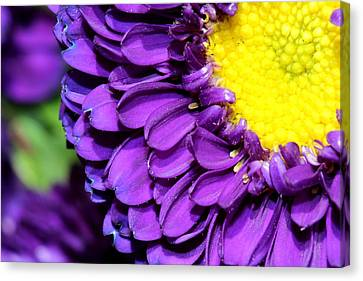 Love The Purple Flower Canvas Print