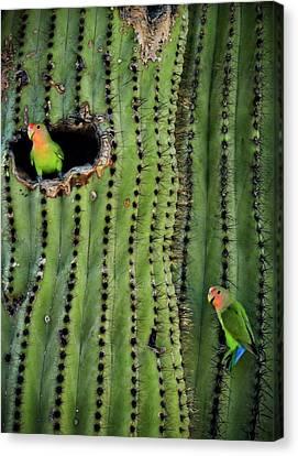 Lovebirds And The Saguaro  Canvas Print by Saija  Lehtonen