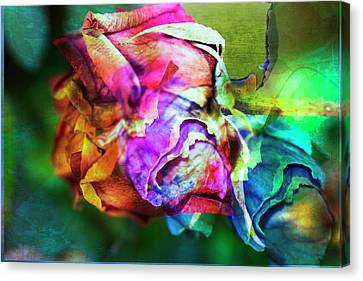 Lovely Lady Canvas Print