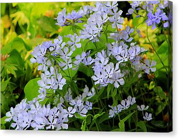 Lovely To Look At Canvas Print
