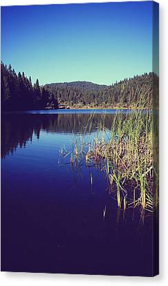 White Pines Canvas Print - Love's What We'll Remember by Laurie Search
