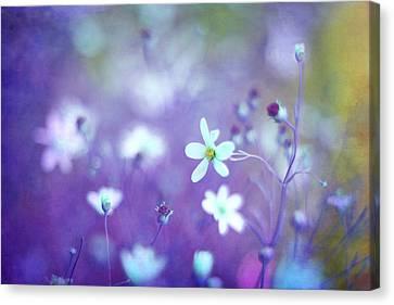 Lovestruck In Purple Canvas Print by Amy Tyler
