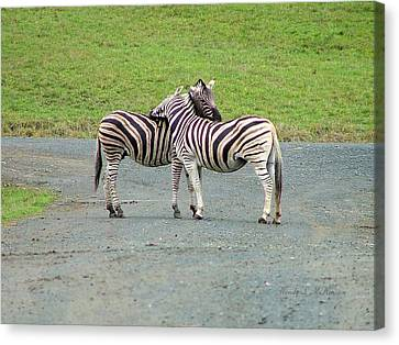 Canvas Print featuring the photograph Lovin' Stripes by Wendy McKennon