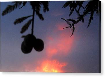 Low Hanging Fruit Canvas Print by Juliana  Blessington