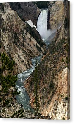 Lower Falls And Yellowstone River Canvas Print by Living Color Photography Lorraine Lynch