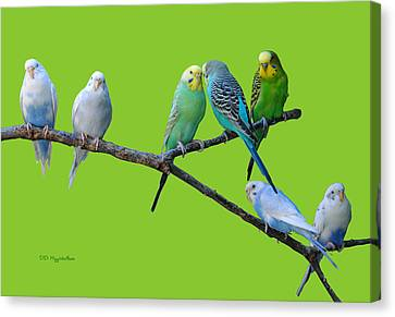 Lucky Seven Canvas Print by DiDi Higginbotham