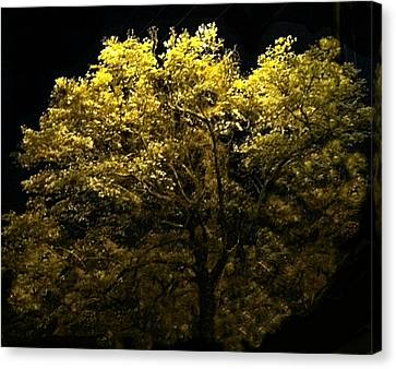 Canvas Print featuring the photograph Luminescent Dogwood  by Elizabeth Coats