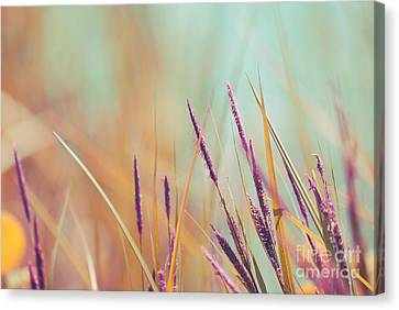 Luminis - S07b Canvas Print by Variance Collections