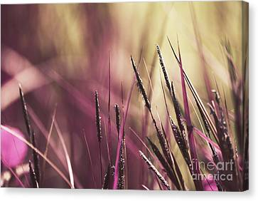 Luminis 02 - S11a Canvas Print by Variance Collections