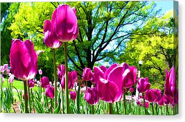 Luminous Purple Tulips In A Flower Garden And Sunny Green Trees Under A Blue Sky Canvas Print by Chantal PhotoPix