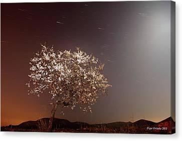 Lunar Almendro Canvas Print by Jol