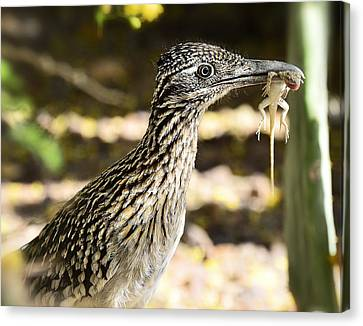 Lunch Anyone Canvas Print by Saija  Lehtonen