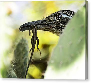 Lunch With A Roadrunner  Canvas Print by Saija  Lehtonen