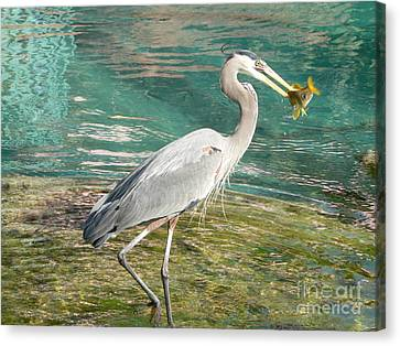 Lunchtime Canvas Print by Laurel Best