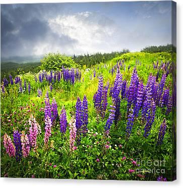 Newfoundland Canvas Print - Lupin Flowers In Newfoundland by Elena Elisseeva
