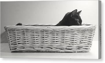 Lurking In The Basket Canvas Print by Bernadette Kazmarski