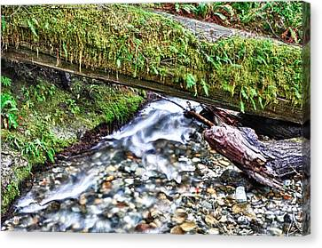 Canvas Print featuring the photograph Lush-ous by Kevin Munro