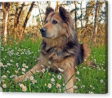 Lying In The Daisys Canvas Print by Tyra  OBryant
