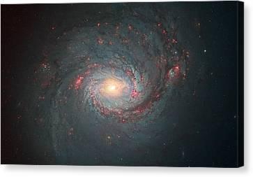 M77 Hubble Space Telescope Canvas Print by Andre Van der Hoeven