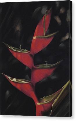 Canvas Print featuring the pastel Macaw Flower - Heliconia Bihai by Ben Kotyuk
