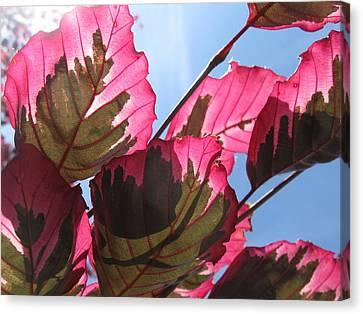 Macro Leaves Canvas Print by Sean Seal