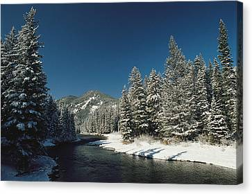 Madison River, Gallatin National Canvas Print