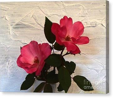 Magenta Roses Canvas Print by Marsha Heiken